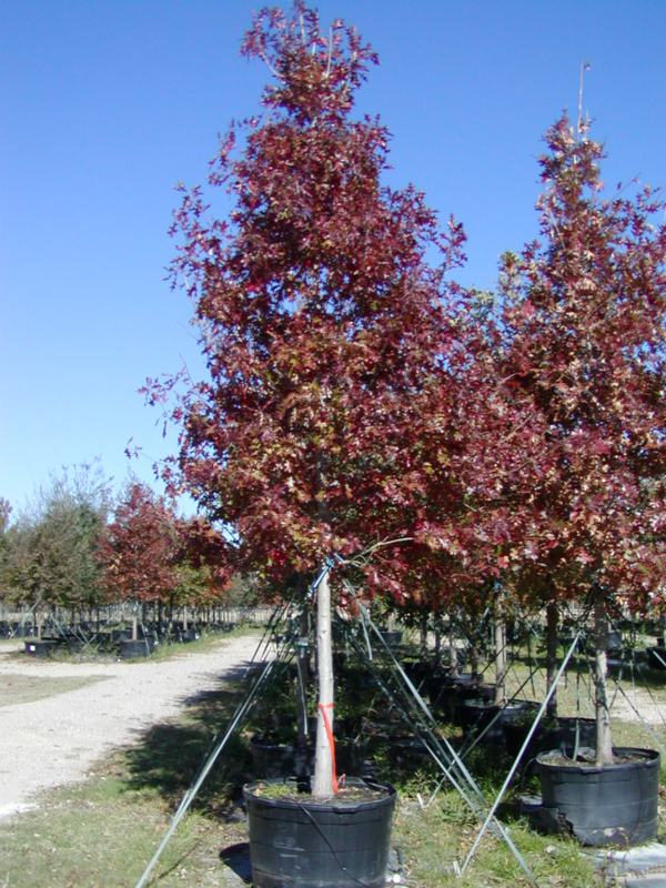 Tree land nursery dallas texas best months to plant
