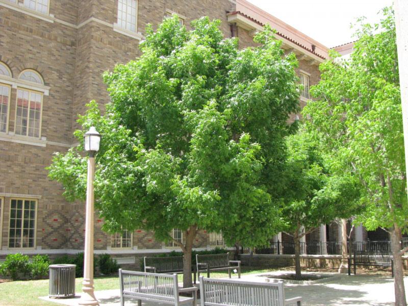 Tree Free Wallpaper Pistachio