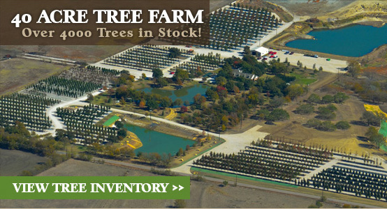 Treeland Nursery is a 40 acre tree farm with over 4000 trees in stock