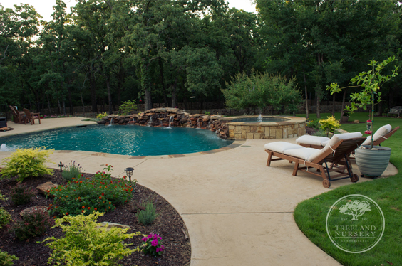 pool landscaped with a Vitex