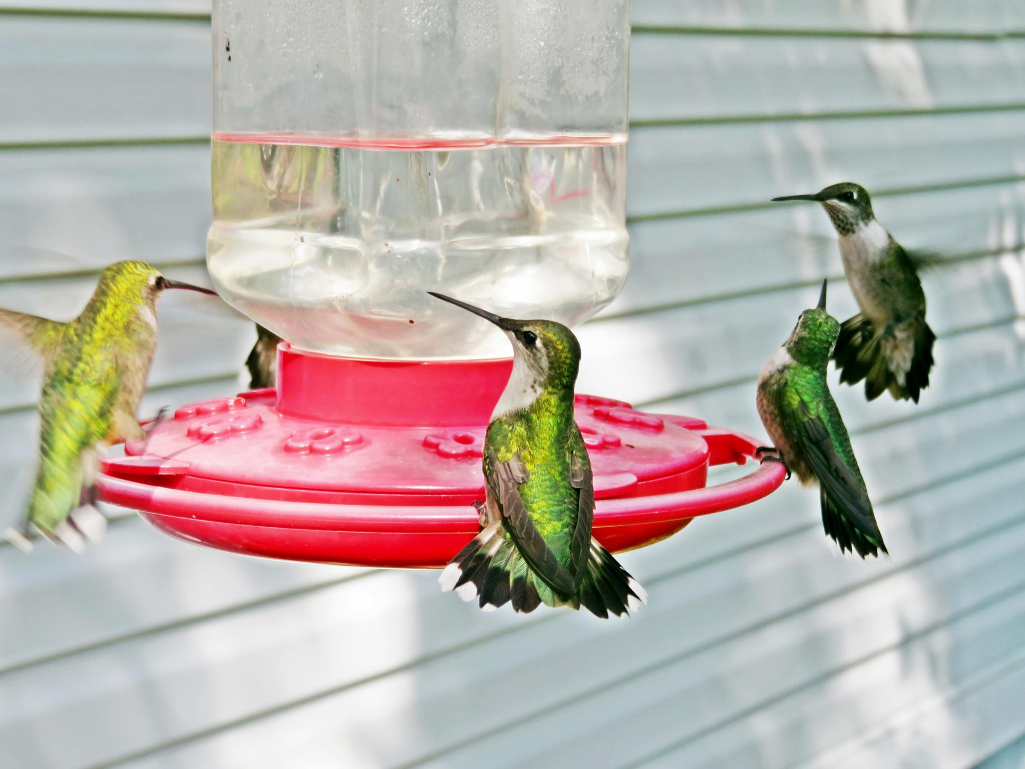Prepare for the Hummingbirds