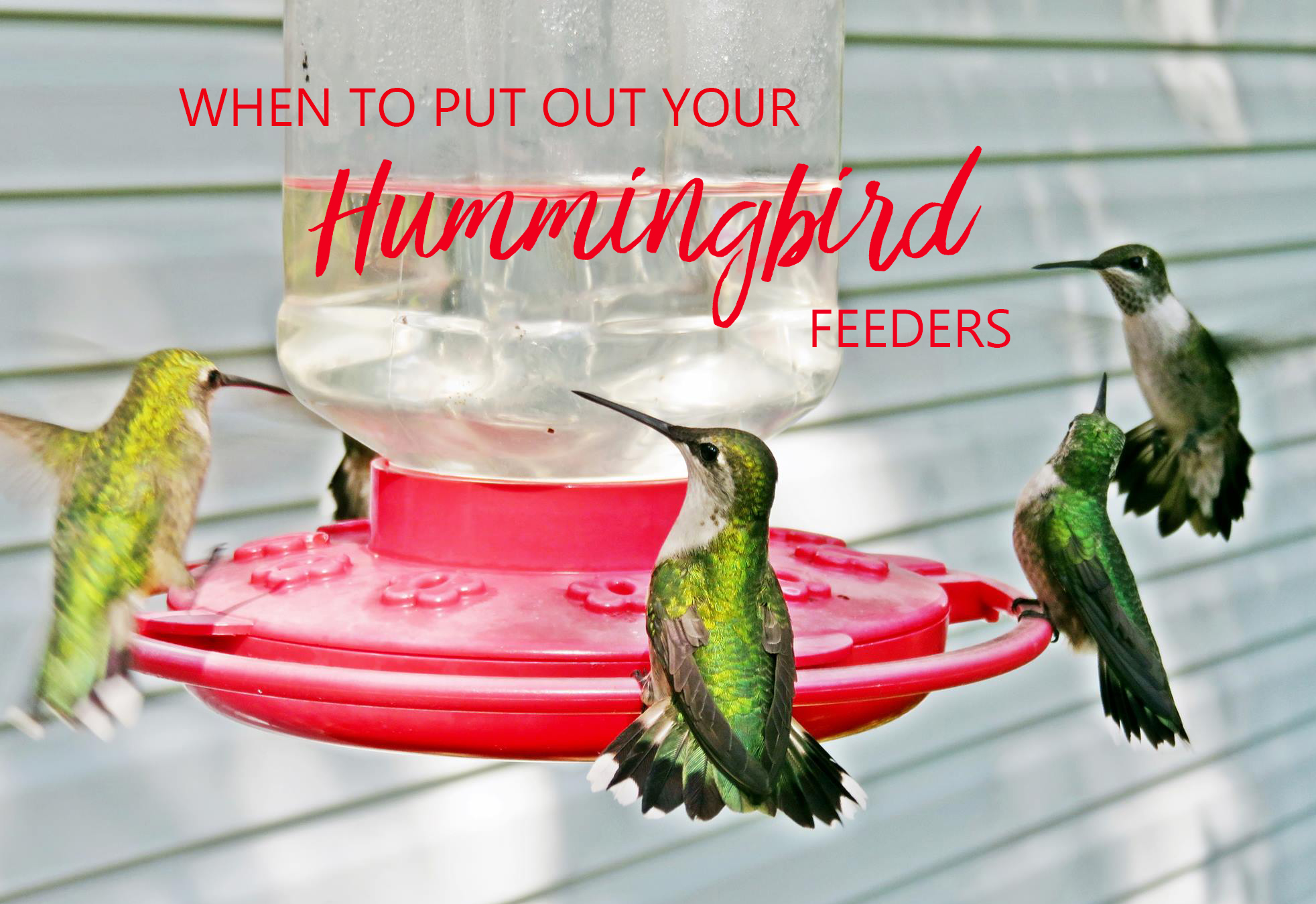 Hummingbird Season is Coming
