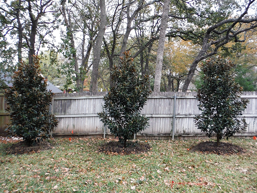 Is Winter a good time of year to plant trees?