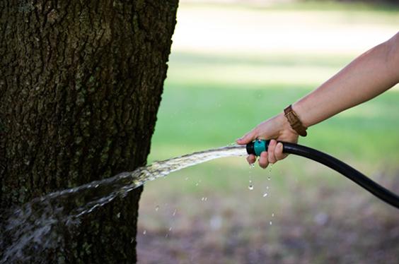 Watering Schedule Treeland Nursery Sugar And Sap