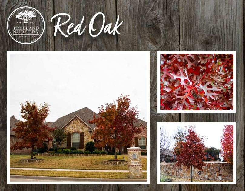 Best trees for Fall Color in Texas.