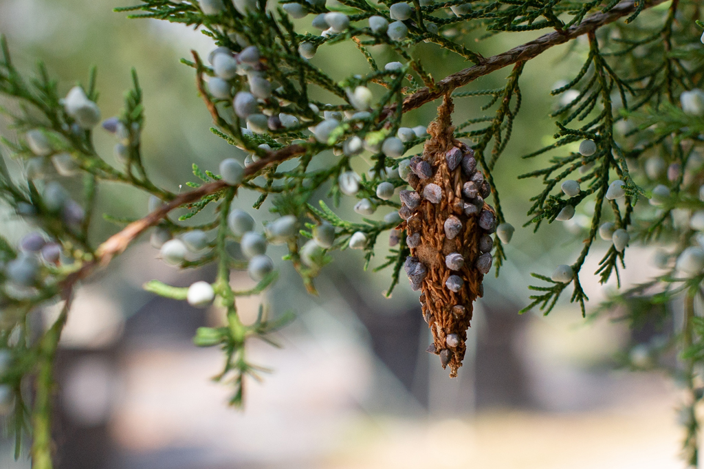 Treating & Preventing Bagworms
