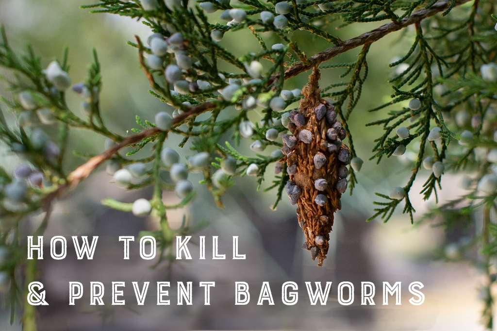 How to Kill & Prevent Bagworms