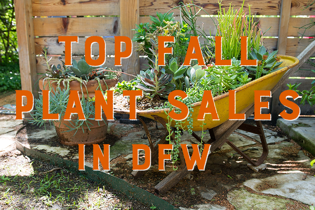 2019 Top Fall Plant Sales in DFW