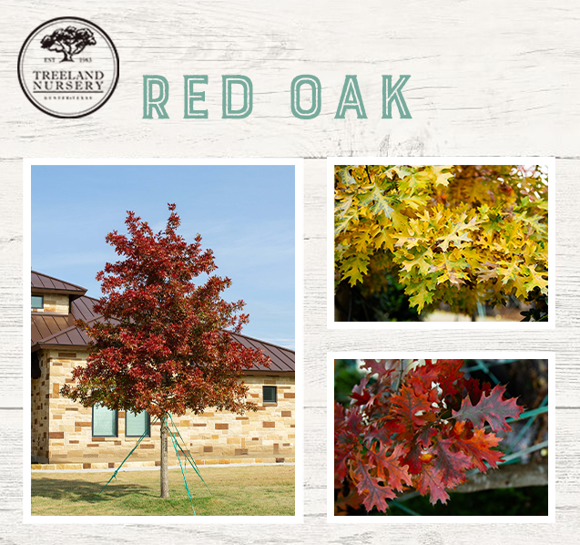 top trees for fall foliage and color in north texas