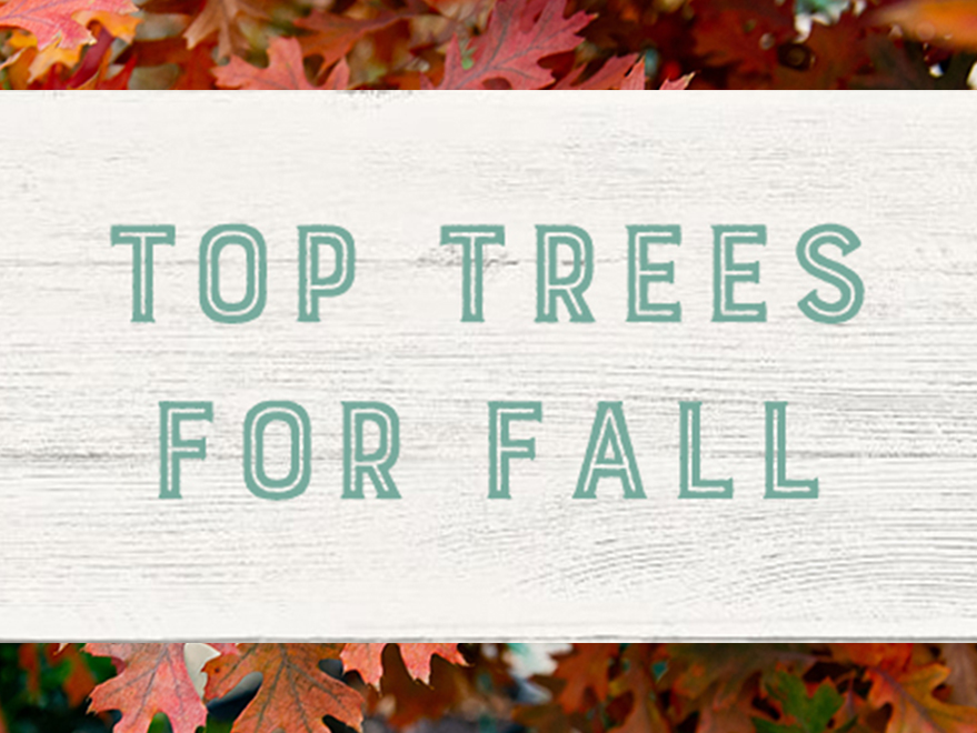 Top trees for Fall Color in Texas