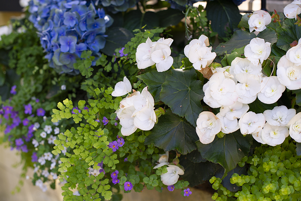 TOP SPRING PLANT & FLOWER SALES IN DFW | 2020 EDITION