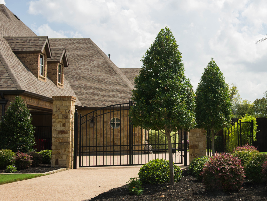 Formally pruned Eagleston Holly trees planted along a driveway. Photographed in North Texas by Treeland Nursery.