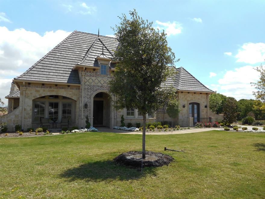 Live Oak Tree planted in a North Texas frontyard by Treeland Nursery.