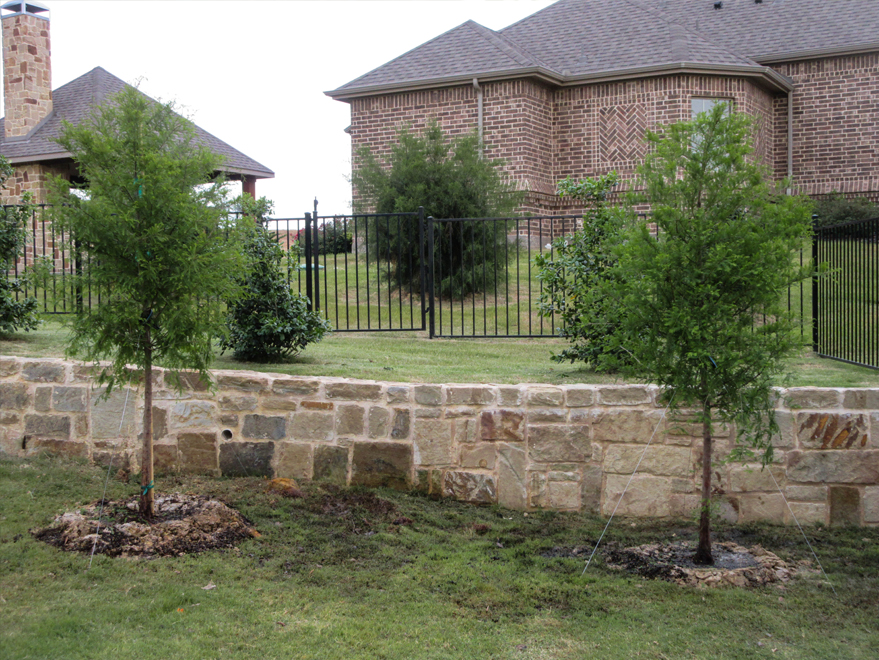 Bald Cypress trees planted along a retaining wall by Treeland Nursery.