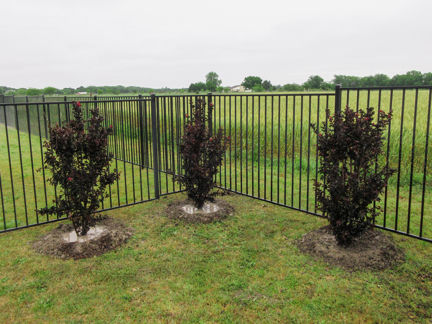 Grouping of Black Diamond Crape Myrtles planted in a backyard by Treeland Nursery.