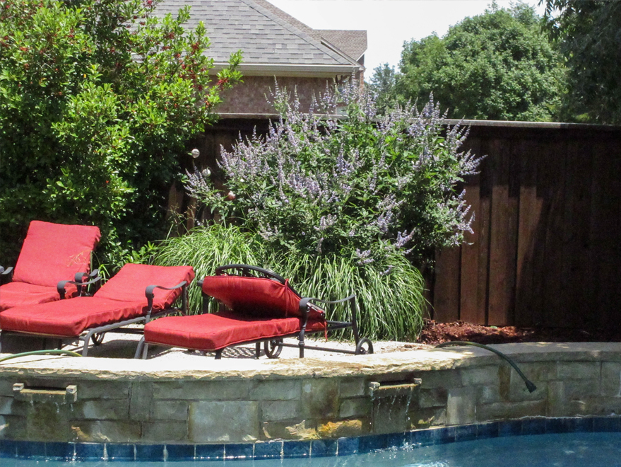 Vitex 'Shoal Creek' planted in a flowerbed alongside a pool by Treeland Nursery.