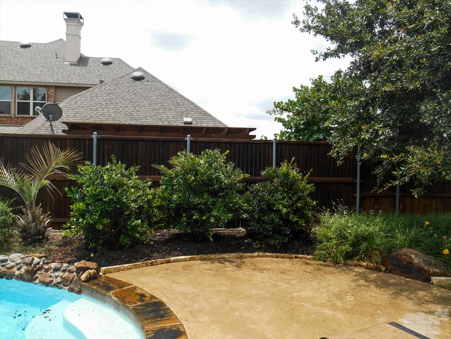 Waxleaf Ligustrums planted by a pool by Treeland Nursery.