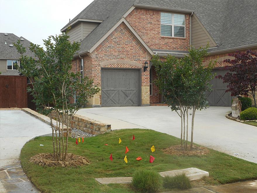 Centennial Crape Myrtles planted in a frontyard between driveways by Treeland Nursery.