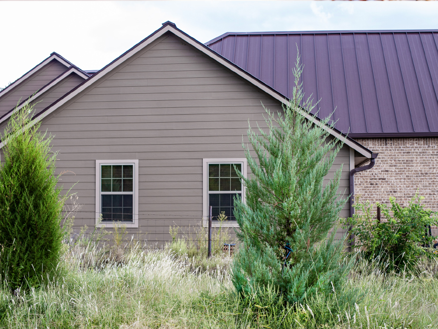 Eastern Red Cedar 'Burkii' planted for a privacy screen by Treeland Nursery.