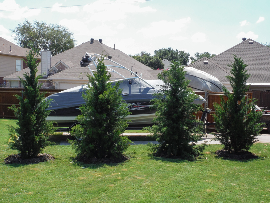Brodie Eastern Red Cedars install to help block the customers boat stored in his backyard.