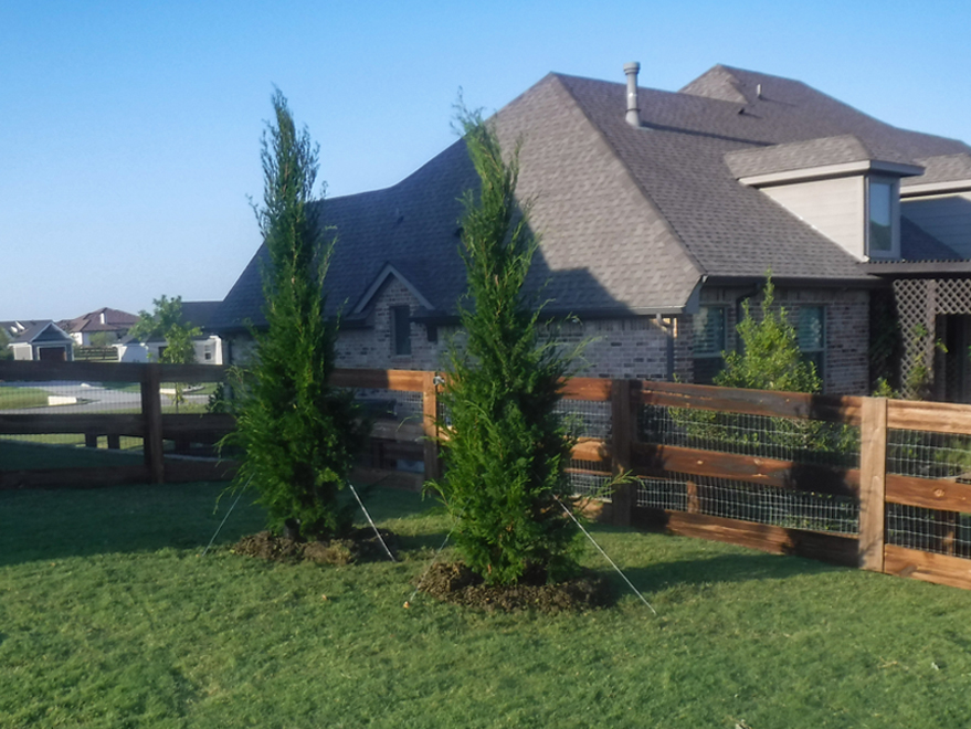 Brodie Eastern Red Cedars installed in a backyard by Treeland Nursery.