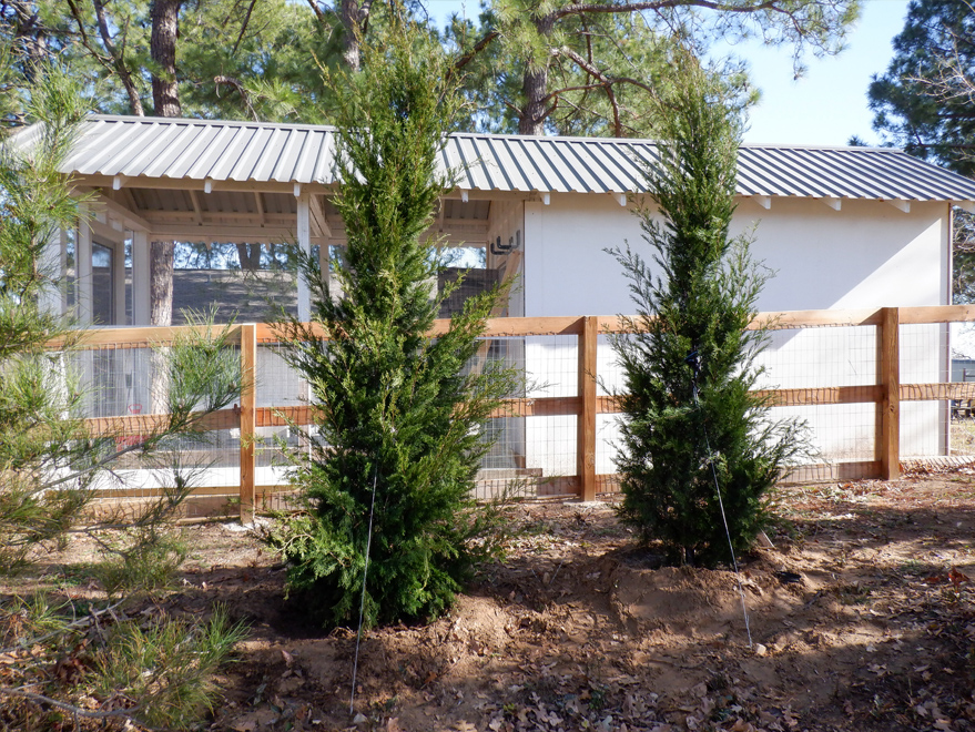 Brodie Eastern Red Cedars install be Treeland Nursery.