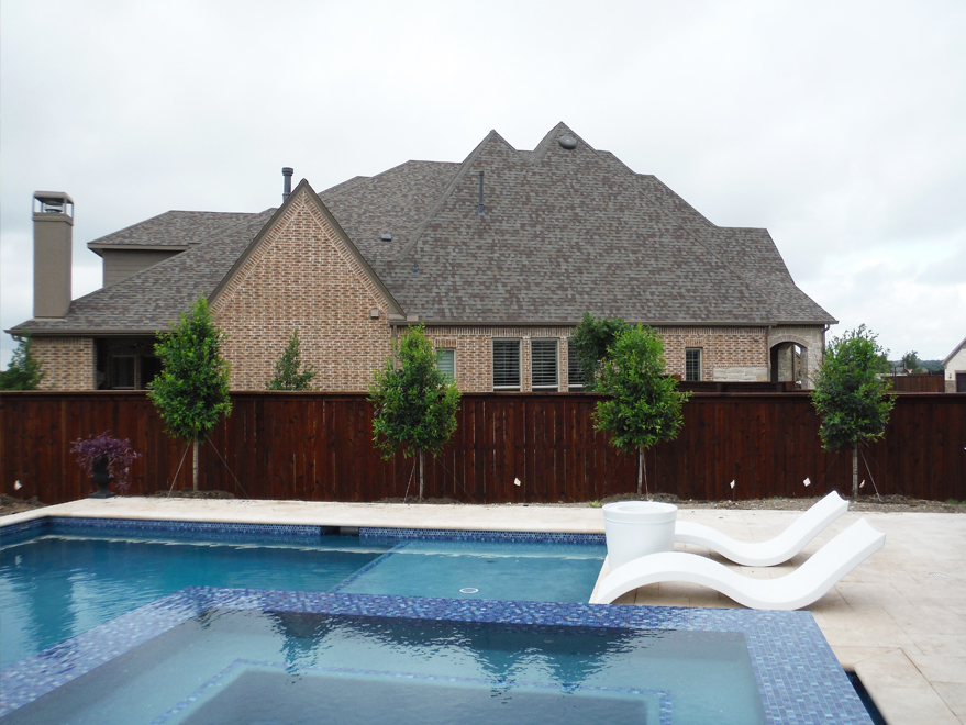 Eagleston Hollies installed along a fence behind a pool.