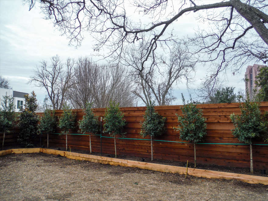 Eagleston Hollies installed to create a privacy screen.