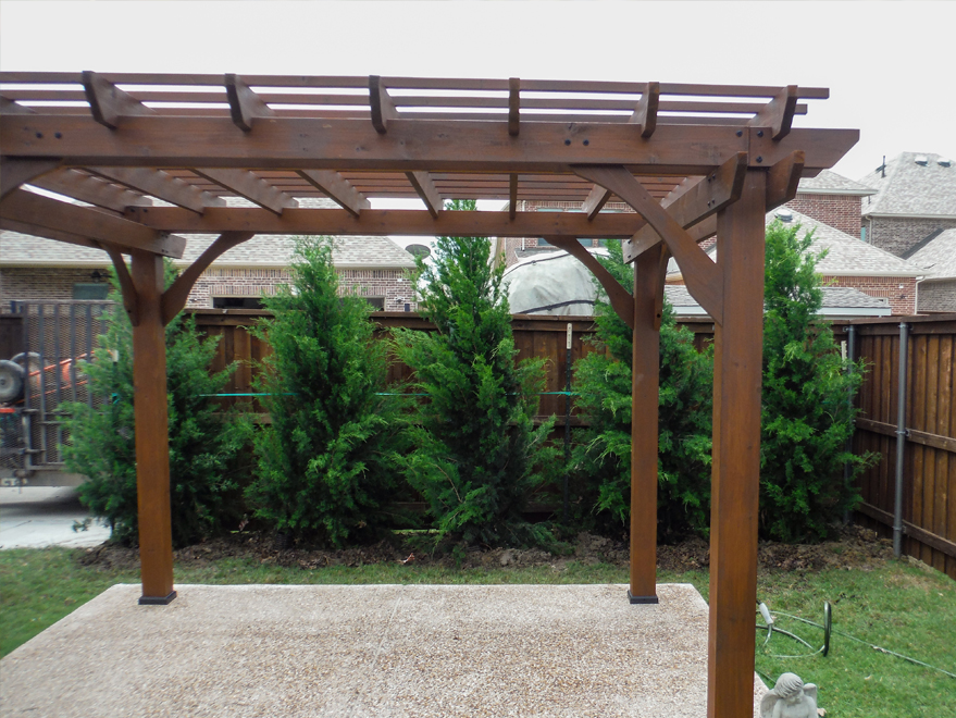 Eastern Red Cedars installed behind a pergola to create a privacy screen.