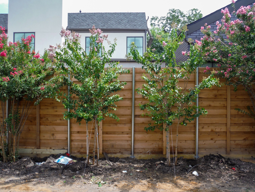 Muskogee Crape Myrtles installed between the customer