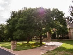 Mature Chinese Pistachio Tree photographed in Dallas, Texas by Treeland Nursery.