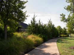 More established row of Eastern Red Cedars that provide year round Privacy Screening for these home owners with wrought iron fencing. Photographed in Carrollton, TX at Austin Waters.