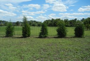 Eastern Red Cedar trees planted along a fence for privacy screening in a backyard. Trees provided and planted by Treeland Nursery.