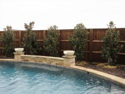 Little Gem Magnolias planted around a pool as a privacy screen. Installed by Treeland Nursery.