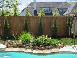 Grouping of Eastern Red Cedar 'Taylor' Trees aka Taylor Junipers, planted between a fence and pool to create privacy screen by Treeland Nursery.