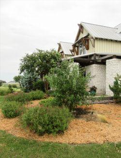 Delta Blues Vitex planted in a flowerbed by Treeland Nursery.