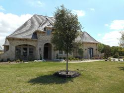 Evergreen Live Oak Tree planted in a large frontyard.