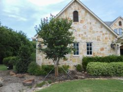 Large Muskogee Crape Myrtle planted by Treeland Nursery in Southlake, Texas.