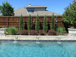 Taylor Cedars installed along a pool by Treeland Nursery.