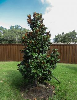 Backyard Tree Installations Landscape Designs Amp Pictures