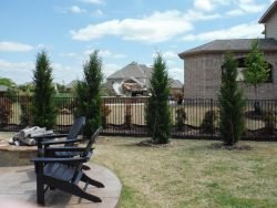 Eastern Red Cedar 'Brodies' planted along a backyard fence to screen out the neighbors.