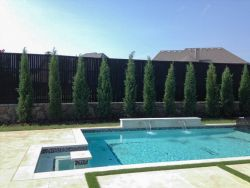 Eastern Red Cedar 'Taylors' planted along a fence and pool in a backyard. Installed by Treeland Nursery.