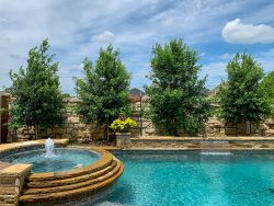 Eagleston Holly - Eagleston Hollies planted by a pool