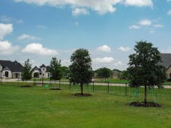 Live Oaks and Red Oaks installed in Parker, TX.