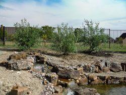 Vitex Trees Prosper, TX