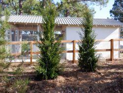 Brodie Eastern Red Cedars install be Treeland Nursery.