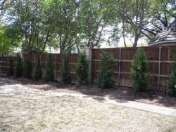 Brodie Eastern Red Cedars installed in a backyard to create a privacy screen.
