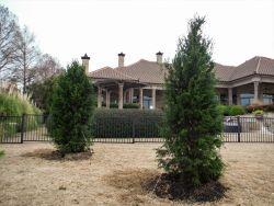 Brodie Eastern Red Cedars installed in a backyard by Treeland Nursery.