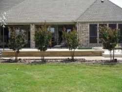 Miss Frances Crape Myrtles installed along a backyard patio.