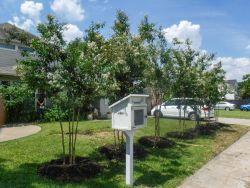 Natchez Crape Myrtles installed by Treeland Nursery.